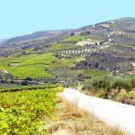 panorama di una collina dove si produce verdea durante un Viaggio di Maturità a Zante