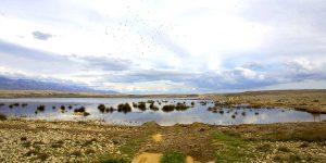 Palude di Veliko Blato - Birdwatching nei viaggi di maturità a Pag