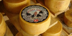 formaggio di Pag - le 5 cose da fare a Pag nei viaggi di maturità