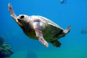 viaggio di Maturità a Zante tartaruga